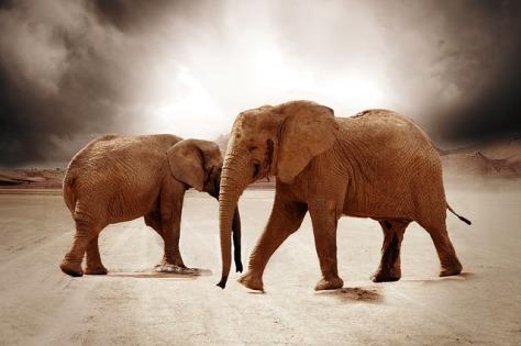elephant-864943_640