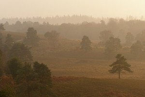 Acres Down in New Forest National Park. Courtesy of Jim Champion - https://www.flickr.com/photos/treehouse1977/