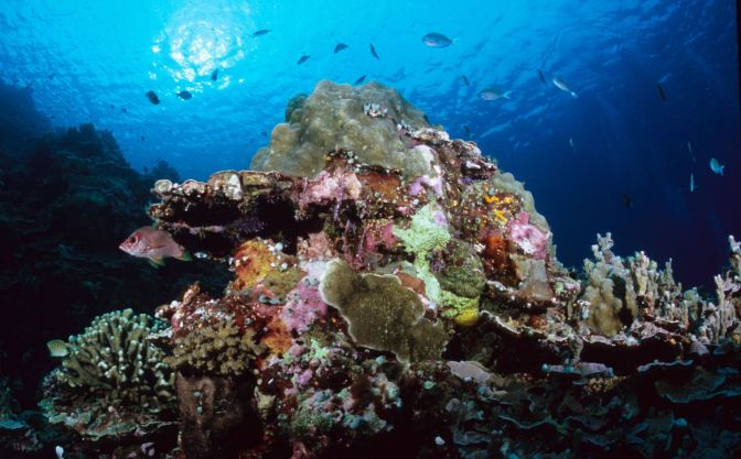 Safeguarding Ocean Resources: Effective Governance of Marine Protected Areas