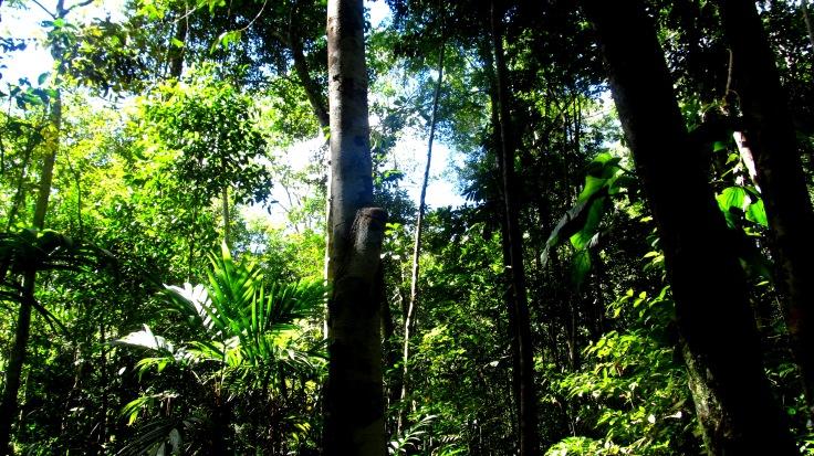 Tropical forest in Loreto, Peru