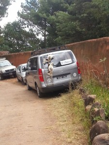 Only in Madagascar lemurs try to break into your car!