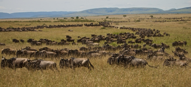 The Journey – the importance of animal movement and migration for conservation