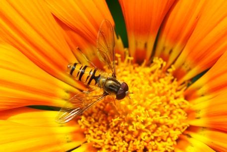 blog-foto-abeja