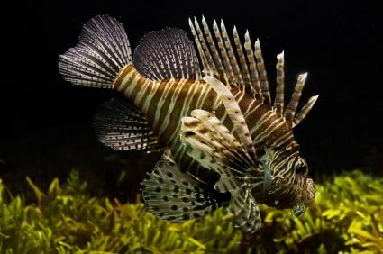 sea-nature-animals-fish