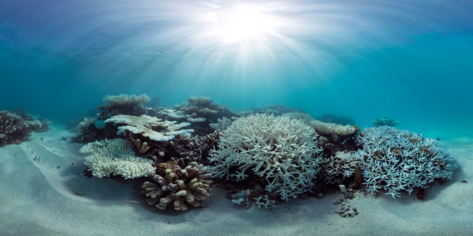Designing the reefs for the future