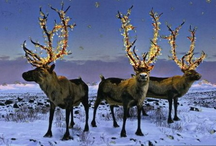 """""""Vixen! Comet! Let's trick Father Christmas and pretend to be Christmas trees"""" """"Ok, Blitzen"""""""