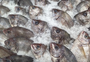 Harvested fish on ice to be sold at a market