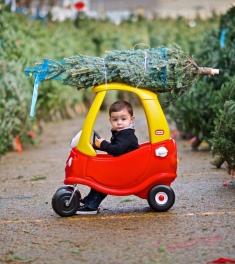 tree-on-a-car