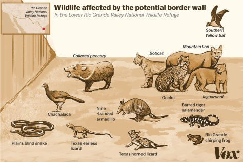 border_wall_wildlife_