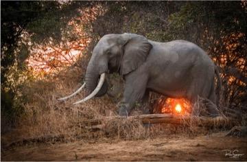 Elephant pic one blog