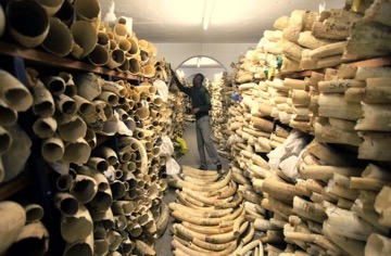 Tusks inventory Zimbabwe