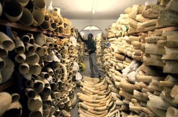 Tusks inventory Zimbabwe